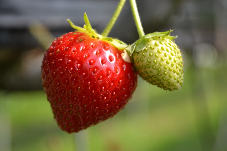 strawberry, website, couple